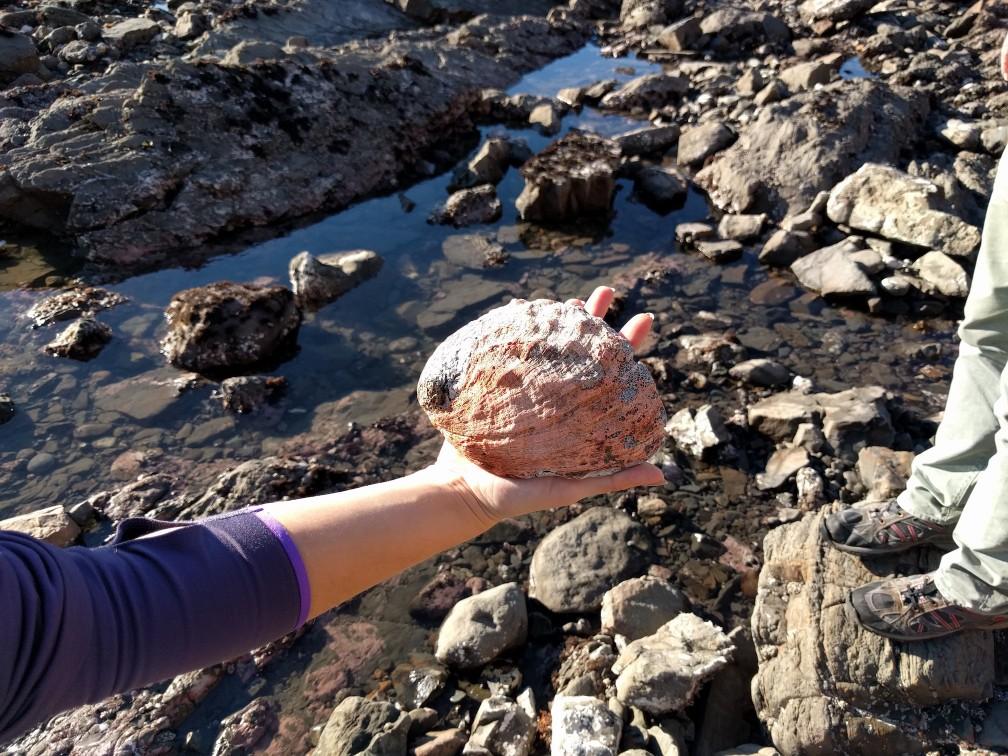 A shell / Ракушка