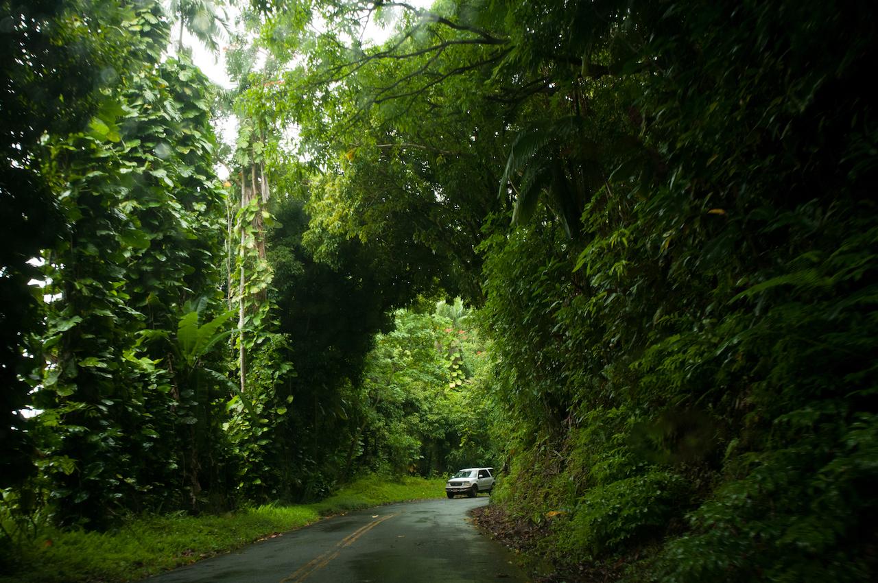 Tropical Botanical Garden on Big Island, Hawaii // Тропический ботанический сад на Острове Гавайи