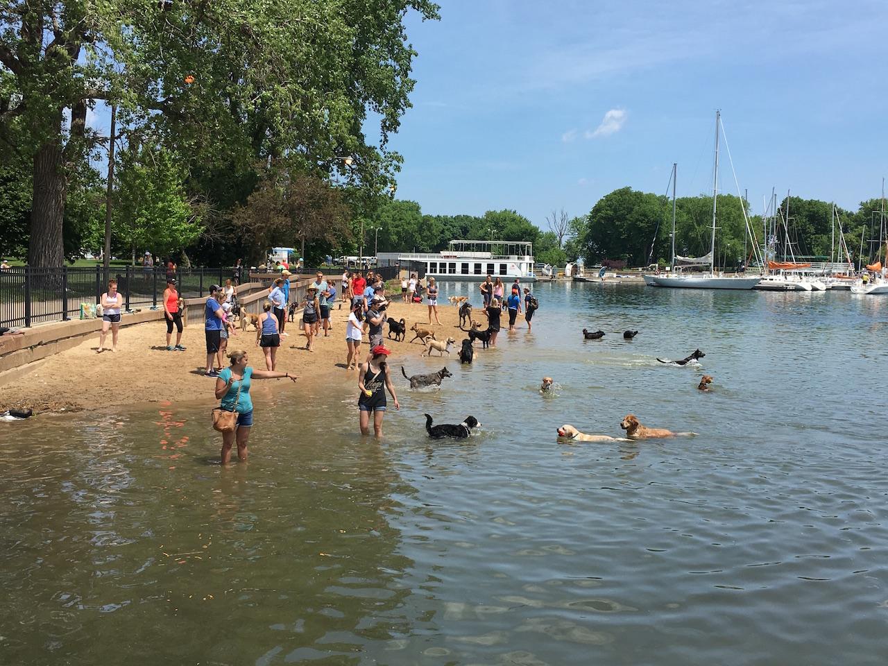 Dog beach in Chicago