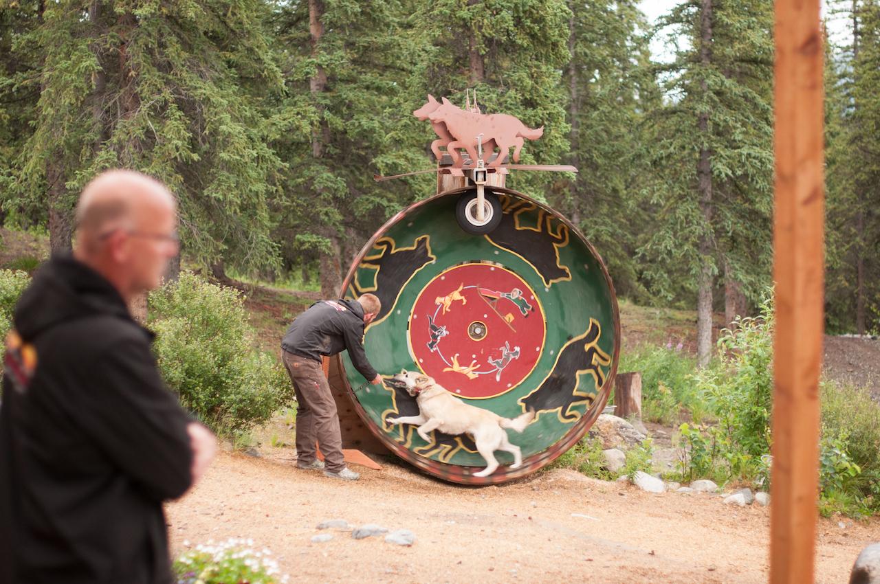 Ездовые хаски, Аляска